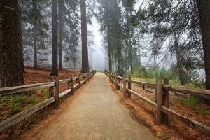 pathway in park
