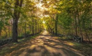 Ed King sun lit pathway