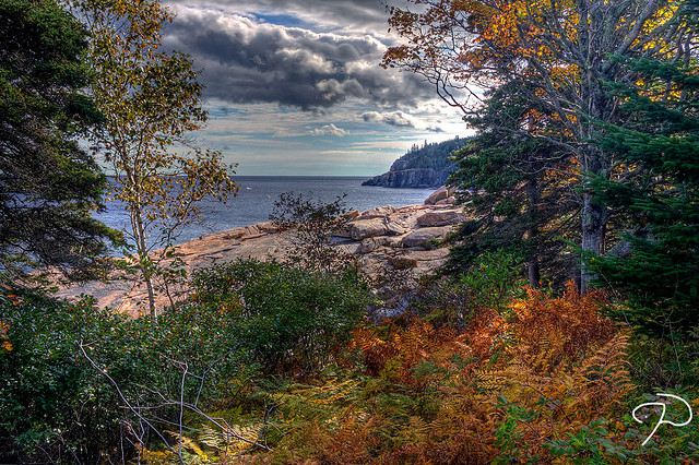 Fall Colors: Acadia National Park