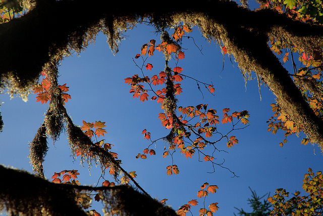 Fall Colors: Olympic National Park