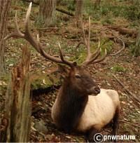 olympic national park wildlife
