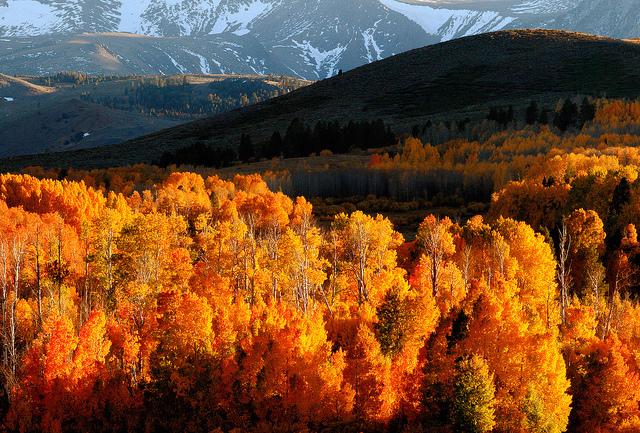 Fall Colors: Yosemite National Park